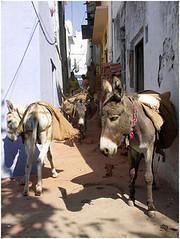 運貨的驢子。(來源:nevil zaveri)
