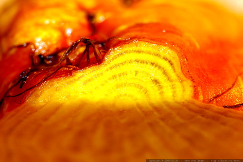 tip of a golden beet    MG 9478