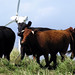 Small photo of Alternative Energy: Stampede Energy!