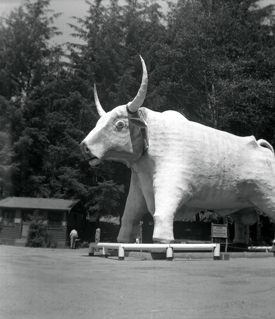 """Babe"" --- a 10-meter-high replica of legendary lumberjack Paul Bunyon's blue ox in 1953"