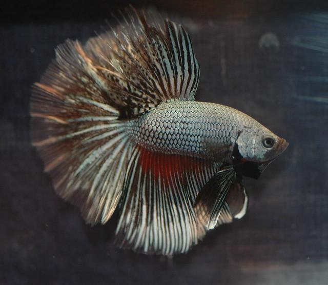 Online Shopping Fish Aquarium