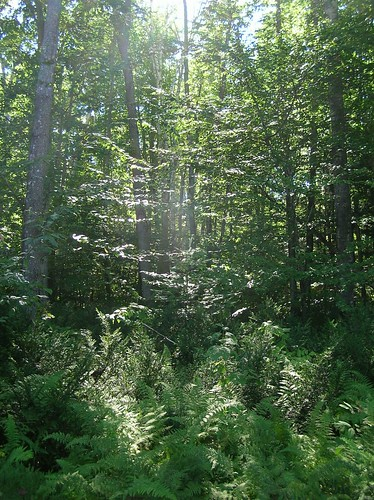 trees light sun geotagged woods shadows bright walk maine through bog filtered birchisland geo:lon=69398296 geo:lat=44921148