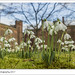 Hodsock Priory and Snowdrops