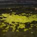 Small photo of Algae