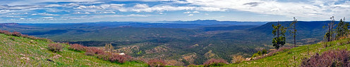 panorama coconinonationalforest bradysmith