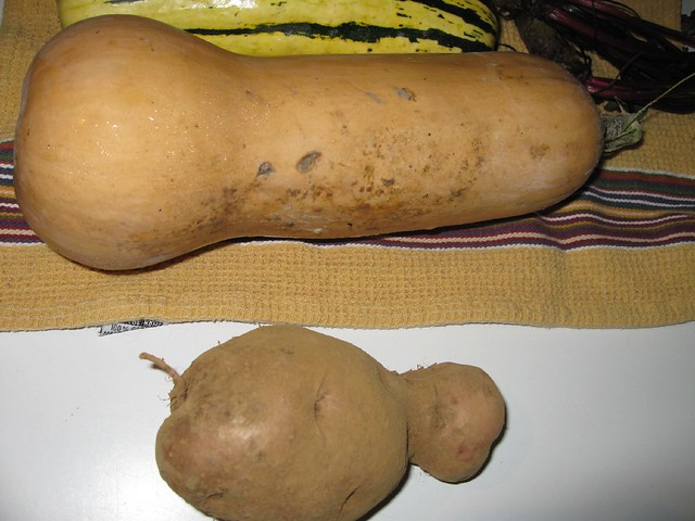 giant funny potato with butternut squash flickr photo