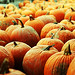 A Sea of Pumpkins