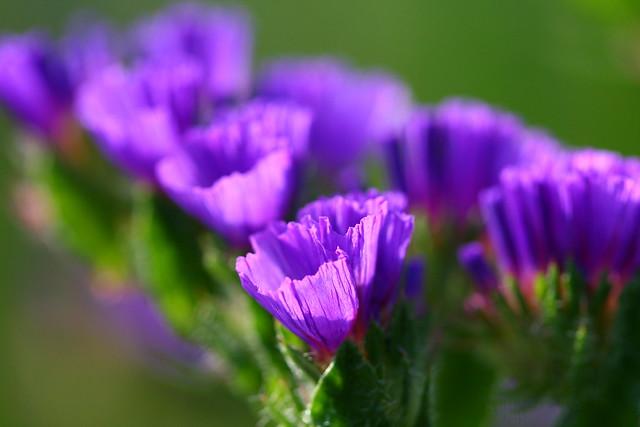 Tiny Purple Flower 3