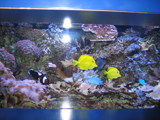 Colored fish mystic aquarium mystic ct flickr photo for Go fish mystic