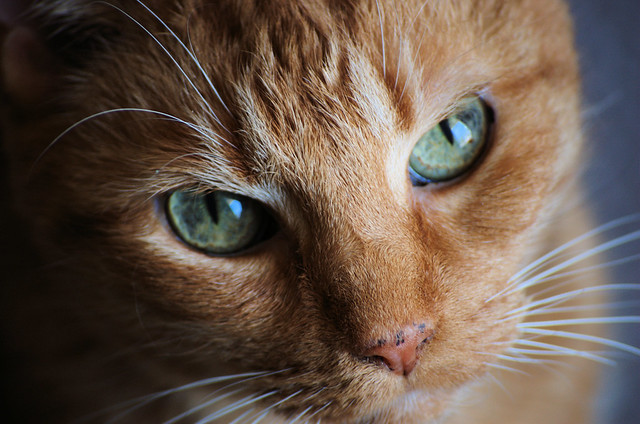 Sunday Mer-cat