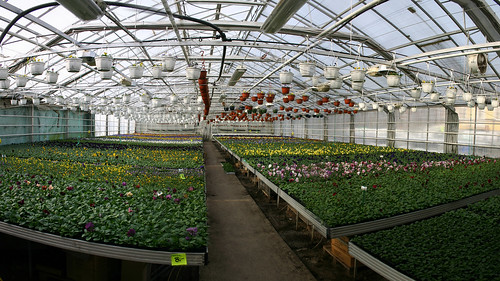 Greenhouse number six