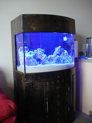 Update 36 gallon bow front reef tank project 3reef for Bow fish tank