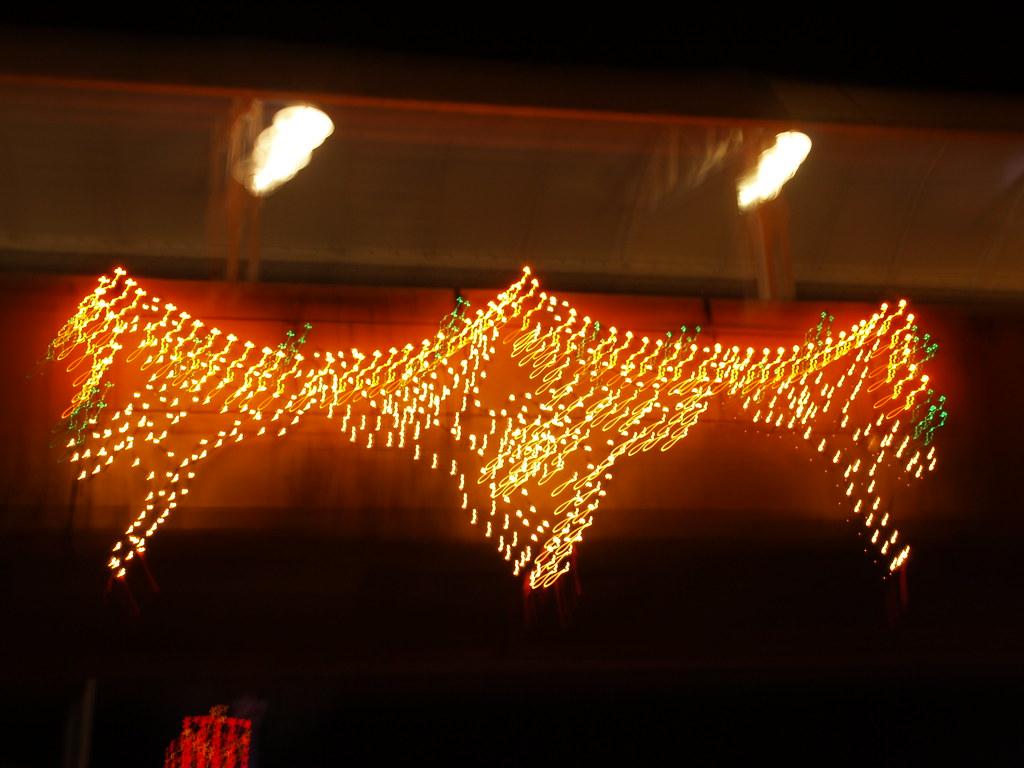 Moody Gardens Christmas.Galveston Texas Moody Gardens Christmas Festival Of Lights