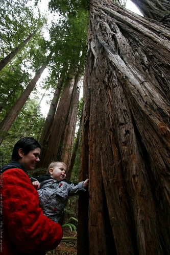 rachel, sequoia & sequoia    MG 7932
