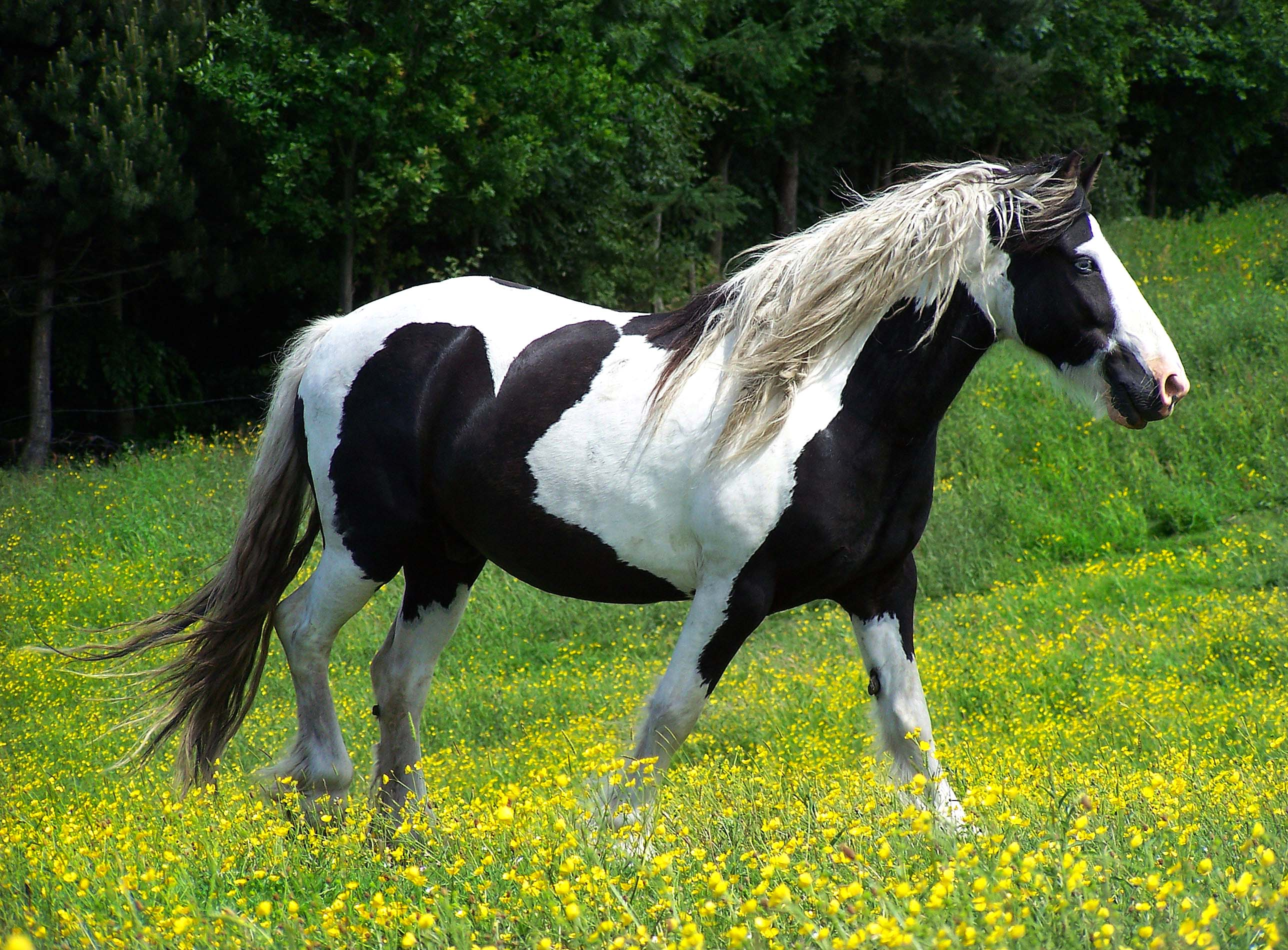 Black and white horse picture - photo#7