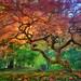 'Arterial Spray' - Portland Japanese Garden by Gavin Hardcastle - Fototripper