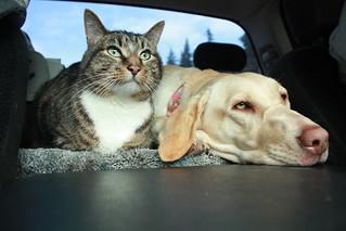 Travel Pets