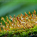 Raindrops on moss by Anuj Nair