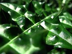 Stacheliges Grün