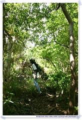 20041016_Guana@BVI_Field work_001_A