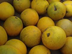 citrus, lemon, meyer lemon, yuzu, produce, fruit, food, sweet lemon, bitter orange,