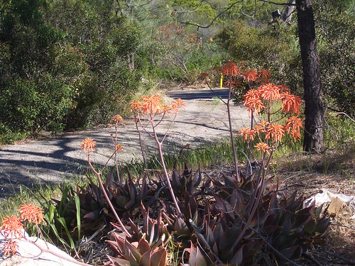 Encinal Canyon ride- trail and flowers