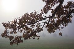 Foggy Morning, November 2016