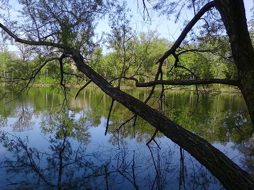 sky reflection tree water minnesota pond phone cell samsung eden prairie hennepin sphm630