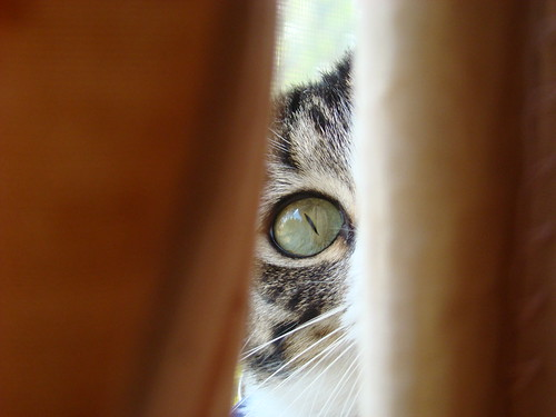 animal cat sonydsch7