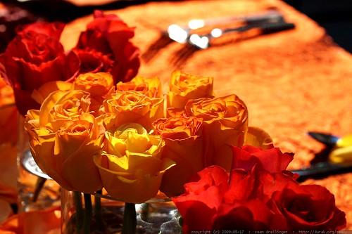 roses    MG 2501