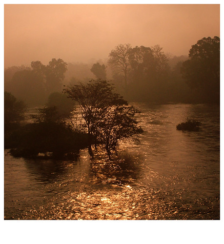 morning red orange sun mist color colour tree yellow fog sunrise river flow gold earlymorning current reddish