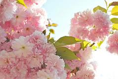 Spring am PINK!