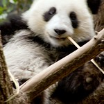 San Diego Zoo 028
