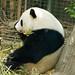 San Diego Zoo 091