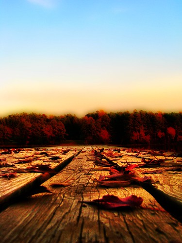 wood autumn trees sky fall nature leaves landscape pier dock wind perspective northcarolina raleigh planks chrysti shelleylake