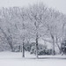 Snow Covered Trees 1