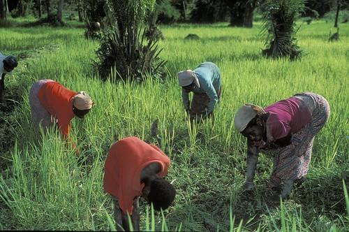 Women doing work on crops