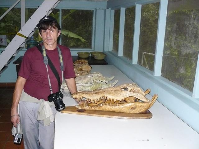 Questões e Fatos sobre Crocodilianos gigantes: Transferência de debate da comunidade Conflitos Selvagens.  - Página 2 2098103468_dc19ec3624_z