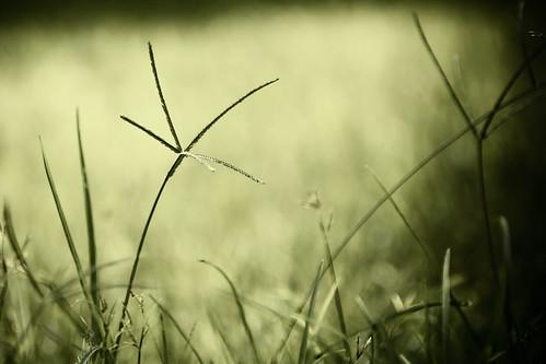 macro green nature grass thailand nikon dof bokeh bangkok soe 70200mmf28gvr d80
