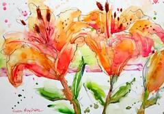 Saskatchewan Prairie Lillies - watercolour