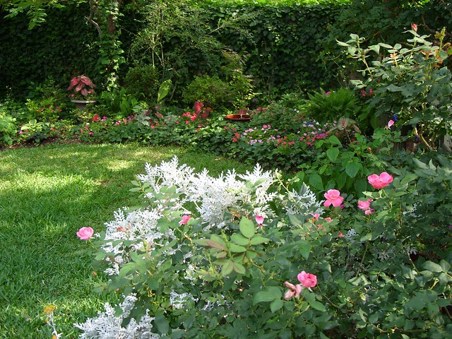 Mixed Rose Border Gives Way To The Shade Garden A Photo