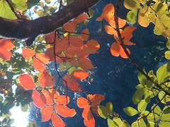 Autumn Leaves, Savannah, GA