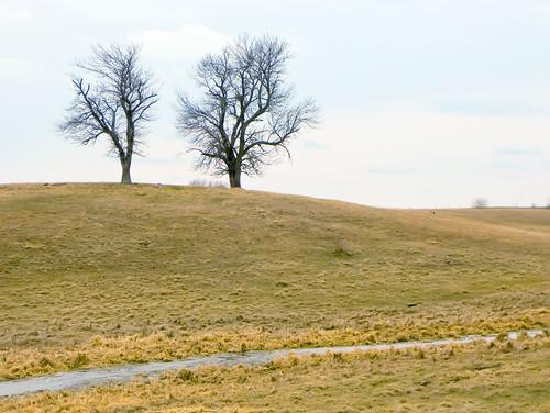 trees cat countryside iowa