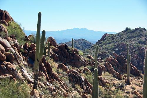 arizona mountains desert hiking hike scottsdale saguaro sonoran mcdowell fourpeaks wekopa mcdowellsonoranpreserve azhike alhikesaz sunrisepeaktrail