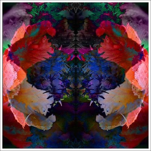 Tulip Kaleidoscope