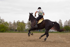 animal sports, equestrianism, english riding, eventing, mare, stallion, hunt seat, equestrian sport, sports, recreation, outdoor recreation, endurance riding, horse, jockey,