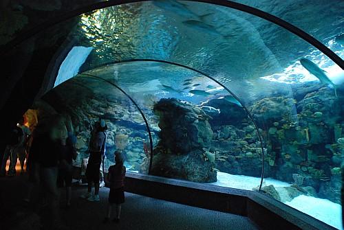 Aquarium Tunnel Omaha Ne Zoo Flickr Photo Sharing