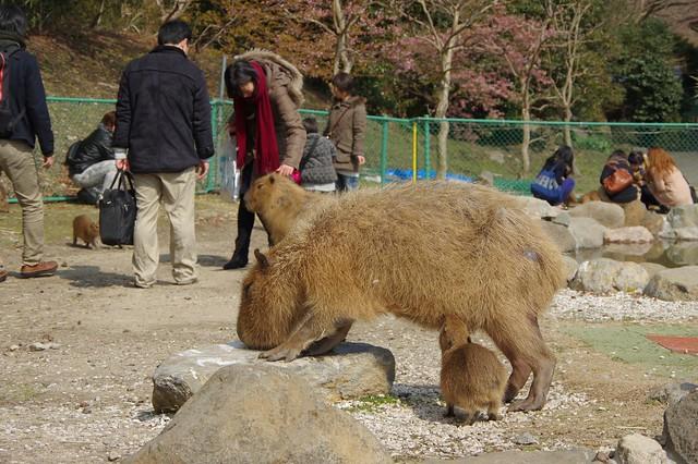 春の伊豆旅行 2014年3月9日 伊豆アニマルキングダム