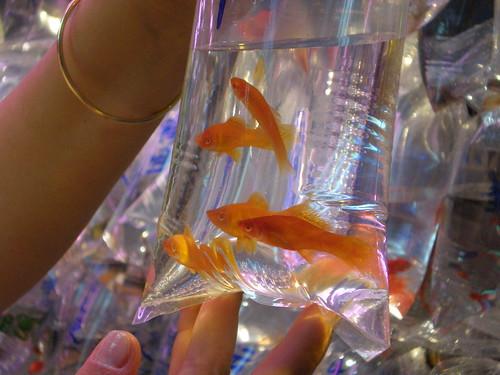 neugierige fische fischtante s erfahrungen im aquaristikladen. Black Bedroom Furniture Sets. Home Design Ideas