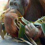 San Diego Zoo 011